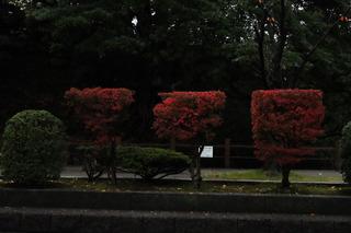 sa_29_1117.jpg