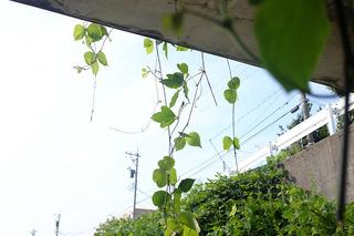 sa_30_0626.jpg