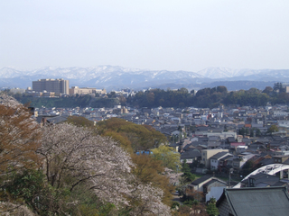 sakura02_c.jpg